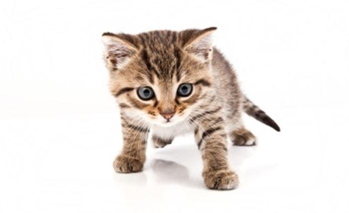 ljubav uska maca